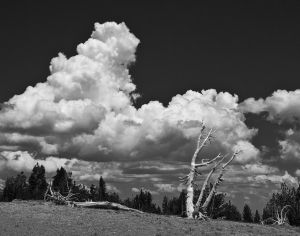 Tree and Cloud at Crater Lake
